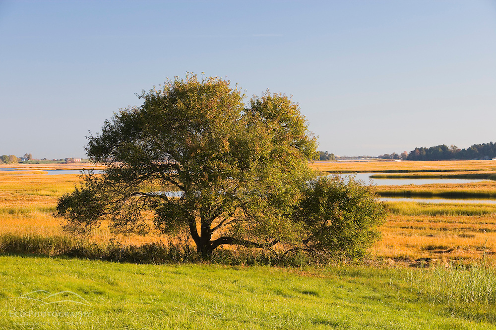 The signature view of the salt marshes and the Essex River at the Essex County Greenbelt Association's Cox Reservation.