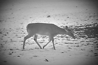 Deer searching for food under the snow on the third day of spring. Image taken with a Fuji X-T2 camera and 100-400 mm OIS lens (ISO 200, 100 mm, f/4.5, 1/100 sec).