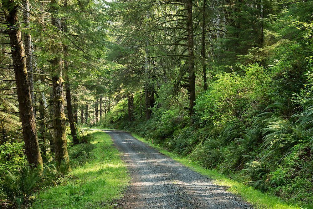 Forest Road 7500, Elliott State Forest, Coast Range Mountains, Oregon.