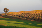 Domaine Drouhin, Dundee Hills, Willamette Valley, Oregon