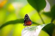 Butterfly-Costa Rica