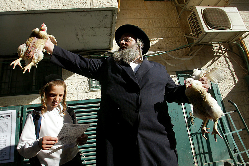 An ultra-orthodox Jewish man waves a chicken over his children's heads as part of the Kaparot ritual in which it is believed that one transfers one's sins from the past year into the chicken. The ritual is performed before the Day of Atonement, Yom Kippur, the holiest day in the Jewish year. The chicken is later slaughtered and given to charity. in Jerusalem. on 20 September 2007. Photo by Olivier Fitoussi /Flash90.