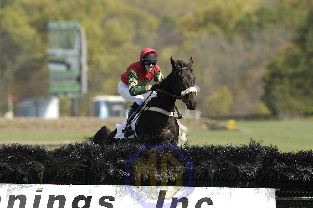 20 October 2007:  Classy Brute with Will Haynes up jumps a National fence in the $25,000 Fidelity Cup during the 70th running of the International Gold Cup Races on October 20, 2007 at the Great Meadow in The Plains, Va.  The race was won by When The Saints (1) ridden by Christoper Read with Classy Brute (3) ridden by Will Haynes and Ghost Bar (2) with William Santoro aboard finishing 2nd and 3rd..