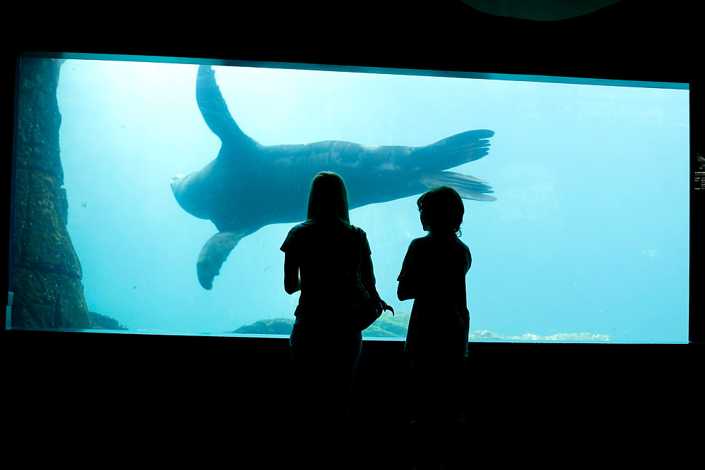 Visitors of the Aquarium in Coney Island watch a sea lion inside it's tank