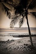 Coconut palms and surf at dusk, Kailua-Kona, Hawaii, USA