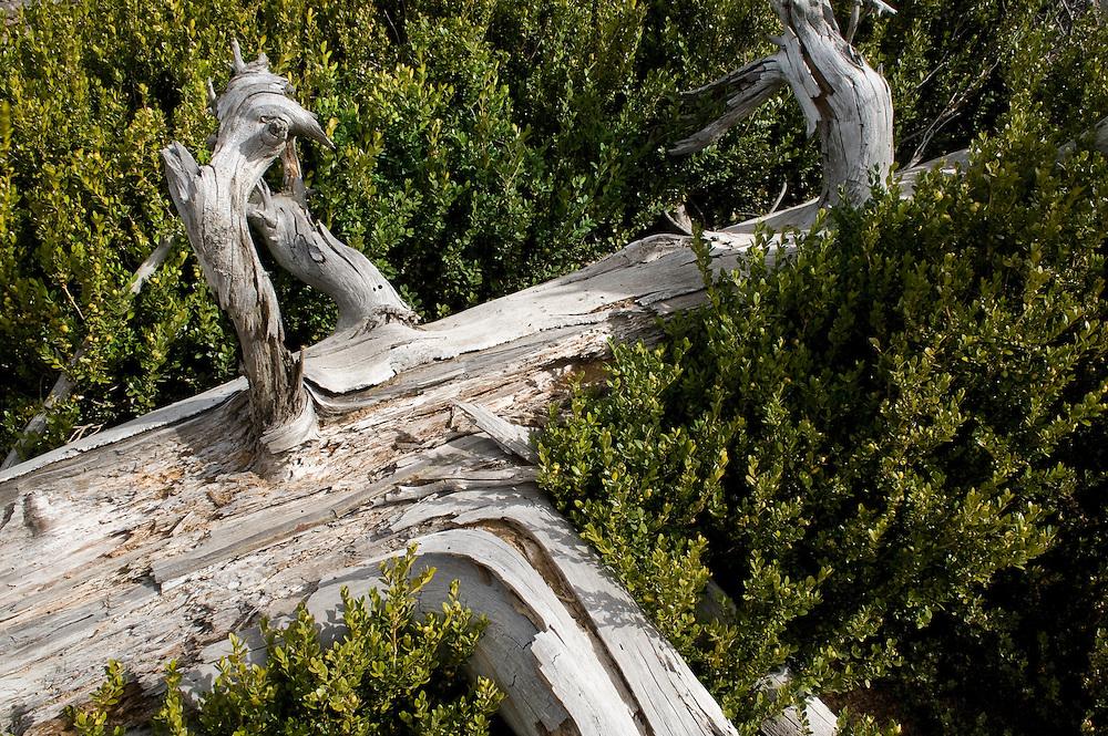 Greece, Pindos Mountains, Pindos NP, Valia Calda, Dry pine trunk