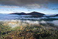 Early morning mist over Rothiemurchus forest in the Cairngorms National Park, Scotland.
