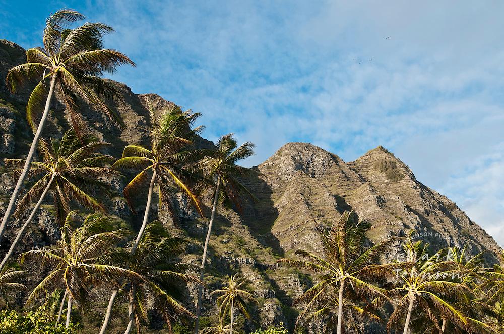 Cliffs & Palm trees, Waimanalo, Oahu, Hawaii