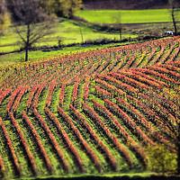 Colori dell'autunno sulle colline di Langa
