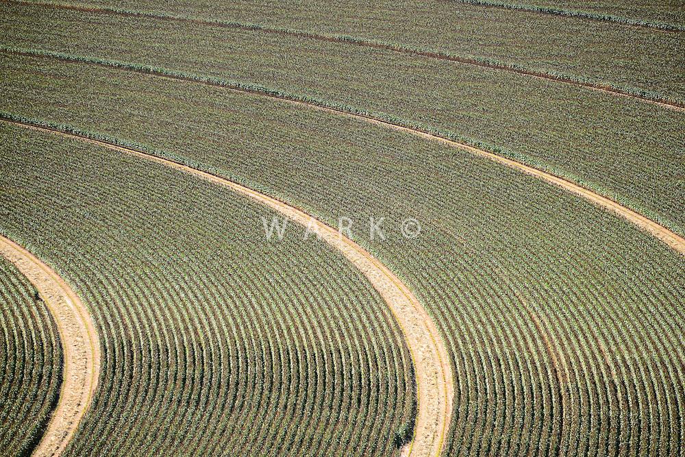 Farmland south of Amarillo, Texas.  Sept 2013.