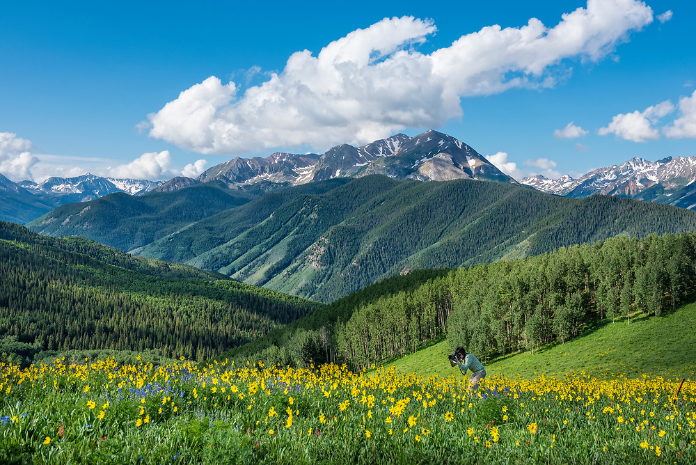 Woman nature photographer working the wildflowers at Annie Basin in the Rocky Mountains near Aspen, Colorado.