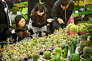 Women design their own cactus arrangement at the Taipei Flower Market.