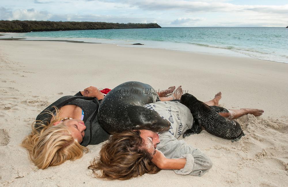 Galapagos Sea Lions & Tourists (Julie Mezainis & Julie Stewart)<br /> Zalophus californianus wollebacki<br /> Gardner Bay, Española (Hood) Island<br /> Galapagos Islands, ECUADOR.  South America