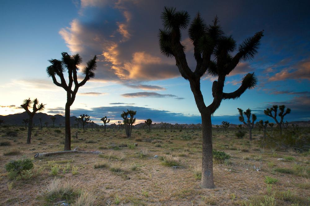 Sunset over the Mojave Desert. Joshua Tree National Park, CA.