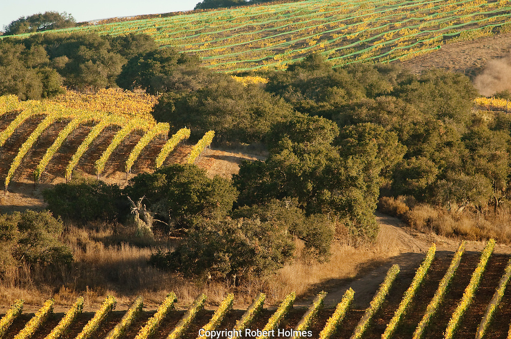 Foley vineyards, Santa Rita Hills, California
