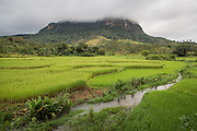 Rice paddies surrounding an isolated fragment of rainforest.