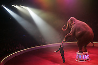 Trained elephant going through its act in a circus