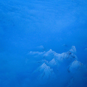 A mountain top towers over the inland ice that still covers most of Greenland. According to researchers at the Danish Meterological Institute, the Greenland ice sheet is shrinking  at an alarming  speed. Nearly ten cubic kilometres of ice melts every day, dumping freshwater into the ocean. The ice sheet plays an important role in cooling down the planet, as 90 percent of sunlight is reflected back out into the atmosphere. Losing the Greenland ice due to man made global warming will rise sea levels by up to 20 feet, disrupt the ocean currents by diluting the salinity and accelerate the heating of the planet.