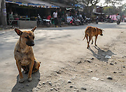 Stray dogs roam a street in Mandalay, Myanmar.