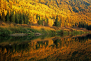 Yaak River and western larch forest in fall. Kootenai National Forest, Yaak Valley, Purcell Mountains, Montana.