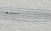 Mar 4, 2019-Dog Sled Racing-Iditarod