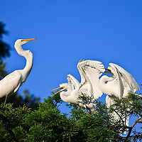Heron and Egret Siblings