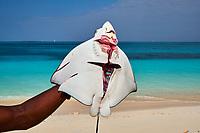 Tanzanie, archipel de Zanzibar, île de Unguja (Zanzibar), plage de Nungwi, pecheur, raie // Tanzania, Zanzibar island, Unguja, Nungwi beach, fisher, ray