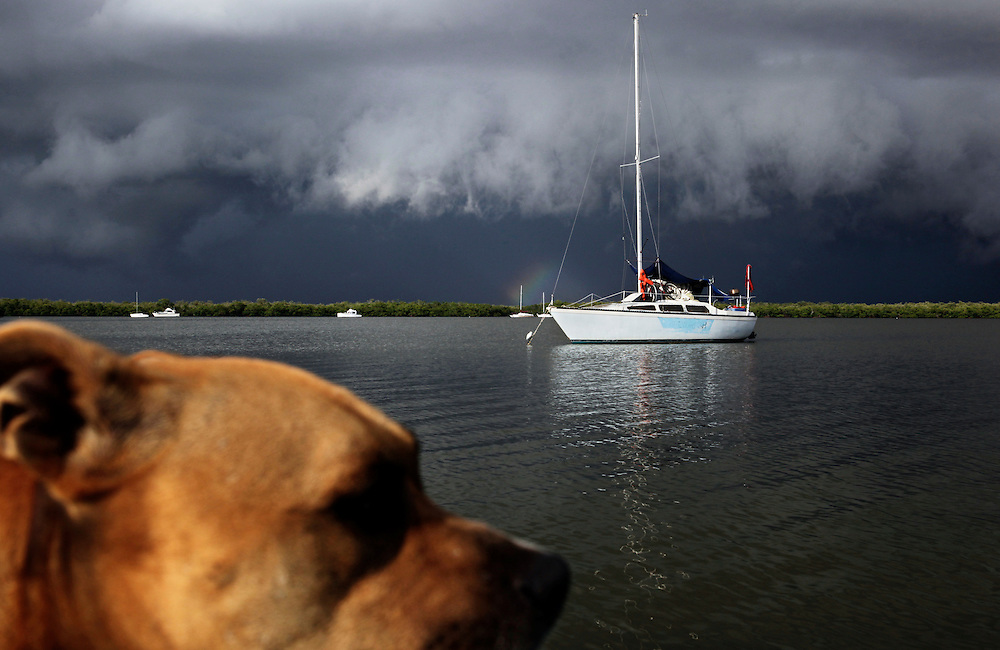 Renegade, Scot Janikula's dog, looks ahead as he stands on the bow of the skiff headed back to his home, a boat anchored in Estero Bay. Janikula says Renegade loves to ride on the skiff, looking for fish in the water as they make their way to shore and back.