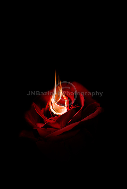 Love and passion illustrated by a single red rose on fire; set against dark background.