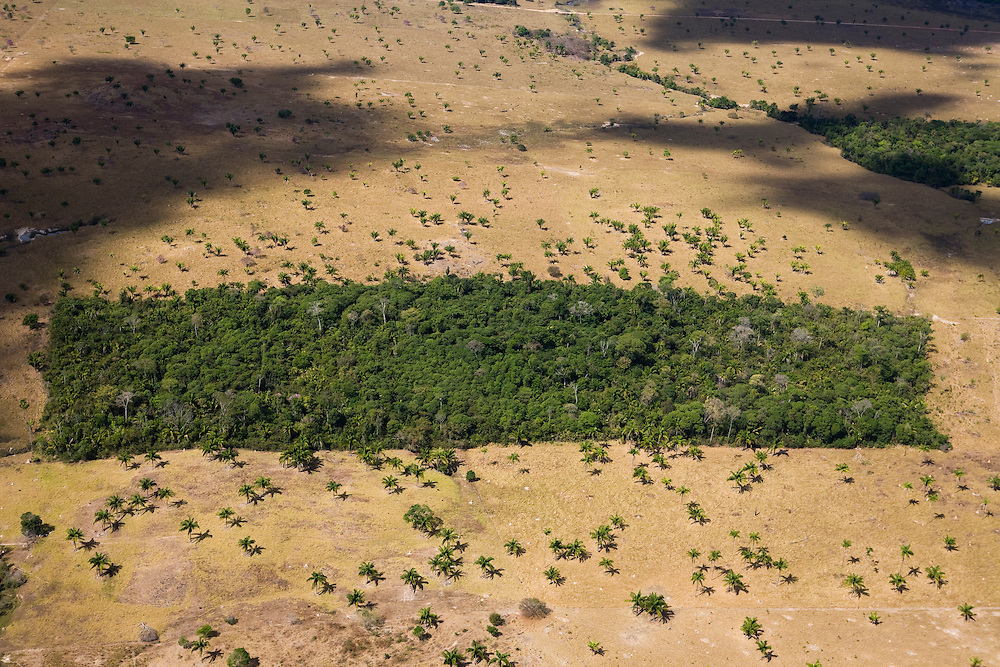 A ptach of rainforest remains amidst the Fazenda Zenetti (cattle farm) in Mato Grosso,m Brazil, August 6, 2008..Daniel Beltra/Greenpeace
