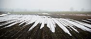Nederland, Wijk bij Duurstede, 7 jan 2011.Uiterwaarden van de Lek met nevel en ijs op de plassen op de akker..Foto (c)  Michiel Wijnbergh