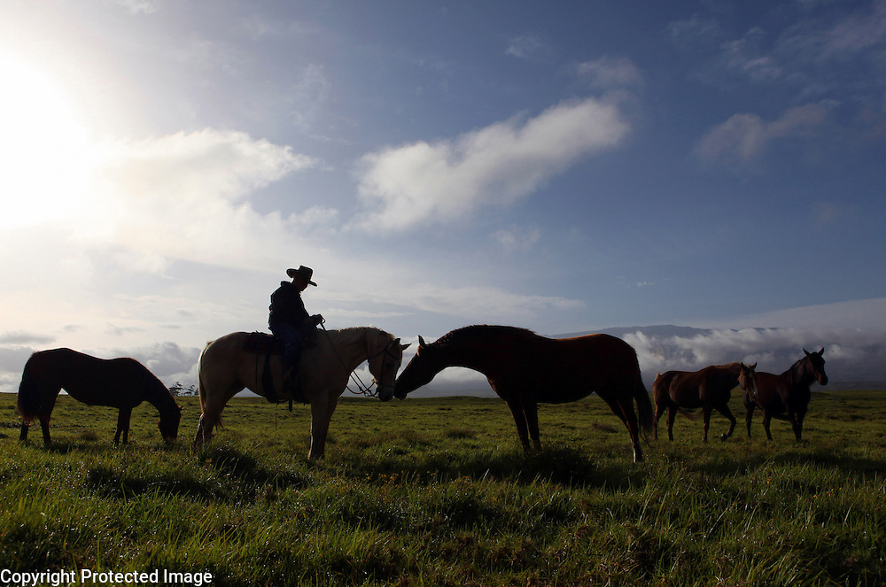 "Jamie Dowsett, 85, who spent most of his life on horses and has rich stories to tell, is photographed riding one of his horses near his home in Waimea, Hi.  ""I'm 85 years old and I still think that cows and horses are the best things that ever walked on earth.  I would give anything if I could still be a cowboy...being out there on the land where nobody bothers you, out in the open where it's quiet...the horses are giving you a wonderful ride in the beautiful countryside...that is a feeling not many people have the opportunity to experience,"" says Dowsett wistfully."