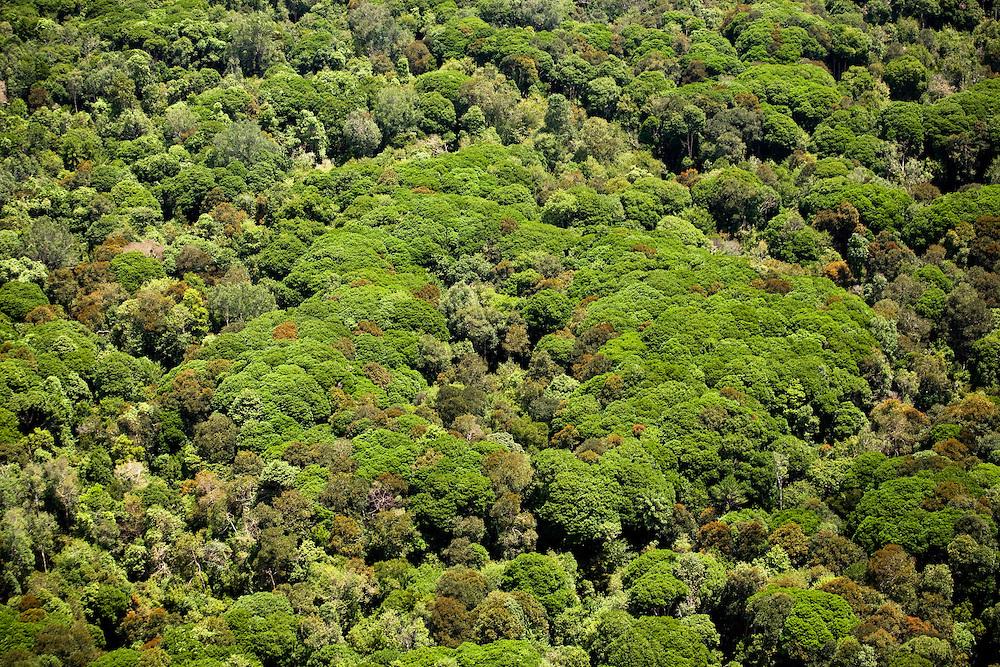Sumatran tiger habitat near Kerumu Satan, Indonesia..Daniel Beltra/Greenpeace