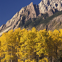Aspen near Castle Mountain. Banff NAtional Park, Canada.