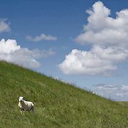 Nederland Ossenisse  gemeente Hulst  19 juni 2010 20100619       ..Serie landschappen provincie Zeeland. Zeeuws-Vlaanderen, polderlandschap landschap dijk  westerschelde.  scenery. Schapen op de dijk.  Illustratief waterveiligheid, infrastructuur. , streek, sustainable, terrein, typerend, typical dutch landscape, typisch hollands, typisch hollands landschap, typische, uitgestrektheid, uitzicht, uniek, unieke, veiligheid, vergezicht, vergezichten, verte, vrij, vrijheid weer, water level, waterbeheer, Waterbeheerplan, waterhuishouding, waterkering, waterkeringen, Waterkeringen, waterlevel, watermanagement, waterniveau, waterpeil, waterplan, waterproblematiek, waterstaatkundige, waterstand, watersysteem, waterveiligheid, waterveiligheid en gebiedsontwikkeling, waterwerken, weersomstandigheden, wei, weide, weidegang, weiland, weiland. Landscape, wijdheid, wijds, wijdsheid, wit, witte, wolk, wolken, wolkenpartij, zeeland, zeeuws vlaanderen, zeeuws-vlaanderen, zeewering, zo vrij als een vogel, zware, zwitserleven gevoel ..Foto: David Rozing