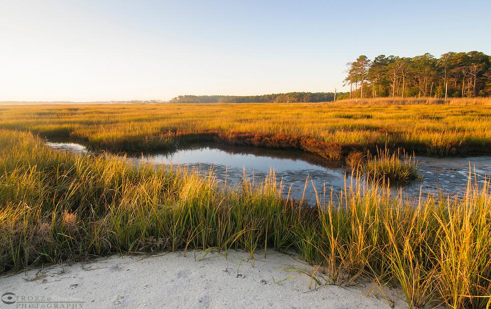 Wetlands, bay marsh, Rehobeth Bay, Delaware, USA
