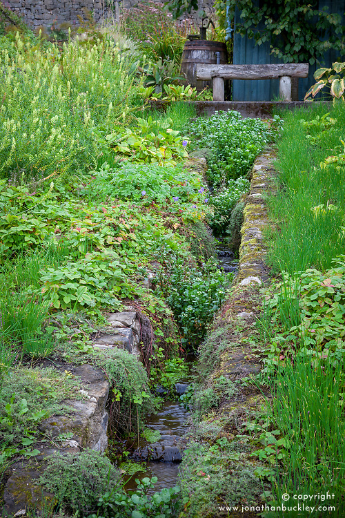 Watercress growing in a stream in the vegetable garden at Chatsworth