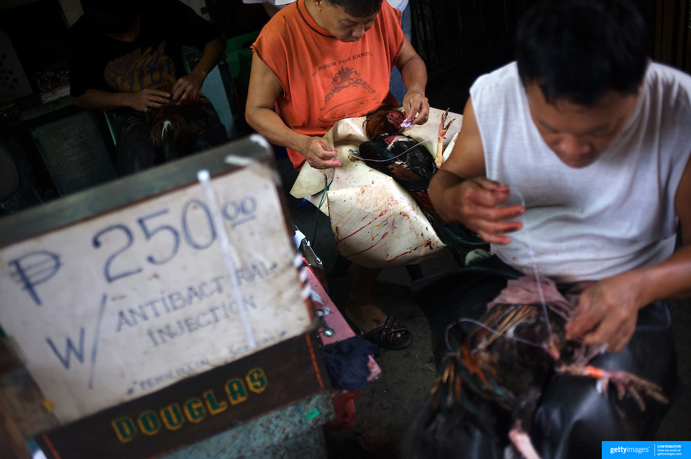 THE PHILIPPINES (Manila). 2009. 'Cock doctors' clean and stitch up the wounded and injured winning birds who survive the fight to the death of two game cocks, each with three inch razor sharp blades fastened to their left ankles   at the La Loma Cockpit,  La Loma, Manila. Photo Tim Clayton <br /> <br /> Cockfighting, or Sabong as it is know in the Philippines is big business, a multi billion dollar industry, overshadowing Basketball as the number one sport in the country. It is estimated over 5 million Roosters will fight in the smalltime pits and full-blown arenas in a calendar year. TV stations are devoted to the sport where fights can be seen every night of the week while The Philippine economy benefits by more than $1 billion a year from breeding farms employment, selling feed and drugs and of course betting on the fights...As one of the worlds oldest spectator sports dating back 6000 years in Persia (now Iran) and first mentioned in fourth century Greek Texts. It is still practiced in many countries today, particularly in south and Central America and parts of Asia. Cockfighting is now illegal in the USA after Louisiana becoming the final state to outlaw cockfighting in August this year. This has led to an influx of American breeders into the Philippines with these breeders supplying most of the best fighting cocks, with prices for quality blood lines selling from PHP 8000 pesos (US $160) to as high as PHP 120,000 Pesos (US $2400)..