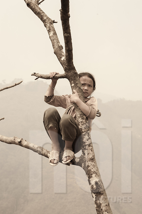 A Hmong girl looks over the valley from her tree perch, Than Uyen area, Lai Chau, Vietnam, Southeast Asia