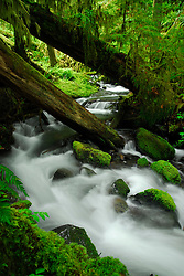 Temperate Rainforest Stream, Olympic National Park, Washington, US