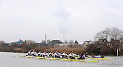Putney, GREAT BRITAIN,    Bull, on the Surrey station as both crews pass along Chiswick Eyot, during the 2008 Varsity/Oxford University [OUBC] Trial Eights, raced over the championship course. Putney to Mortlake, on the River Thames. Thurs. 11.08.2008 [Mandatory Credit, Peter Spurrier/Intersport-images]..Crews - .Bull, Bow. Colin KEOGH, 2. Douglas BRUCE, 3.Michal PLOTOWIAK, 4. David HOPPER, 5. Aaron MARCOVY, 6. Ben HARRISON, 7. Sjoerd HAMBURGER, Stroke Colin SMITH and Cox Philip CLAUSEN-THUE...Bear, Bow. Tim FARQUHARSON, 2. Ben ROSENBERGER, 3. Mike VALLI. 4. Alex HEARNE, 6 Tom SOLESBURY, 7 George BRIDGEWATER, Stroke, Ante KUSURI and Cox Adam BARHAMAND. Varsity Boat Race, Rowing Course: River Thames, Championship course, Putney to Mortlake 4.25 Miles,