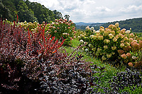 Ornamentals growing at the Mountain Horticultural Research and Extension Center in Henderson County.