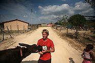 Donkey Walker