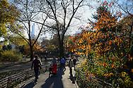 Central Park, Manhattan, New York, NYC.