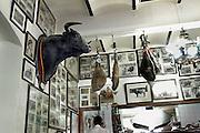 Spanje, Sanlucar de Mayor, 7-5-2010In een cafe hangt de kop van een stier, als trofee van de stierenvechter, de toreador.Foto: Flip Franssen/Hollandse Hoogte