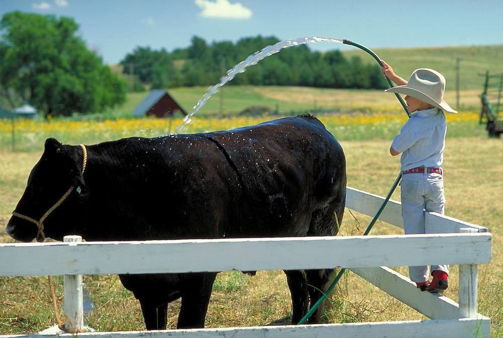 Boy watering cow, Arthur County, Nebraska