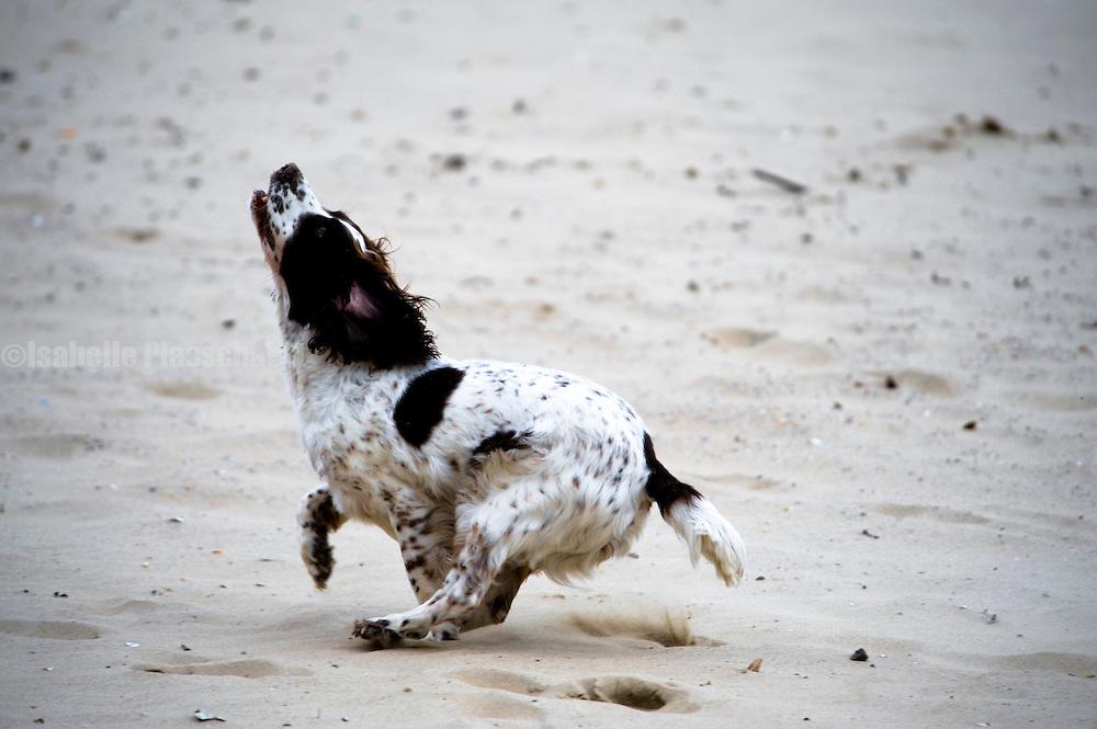 Bournemouth beach, dogs playing.