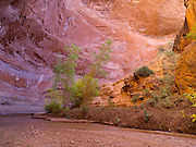 Coyote Gulch, Grand Staircase-Escalante National Monument, Kane County, Utah