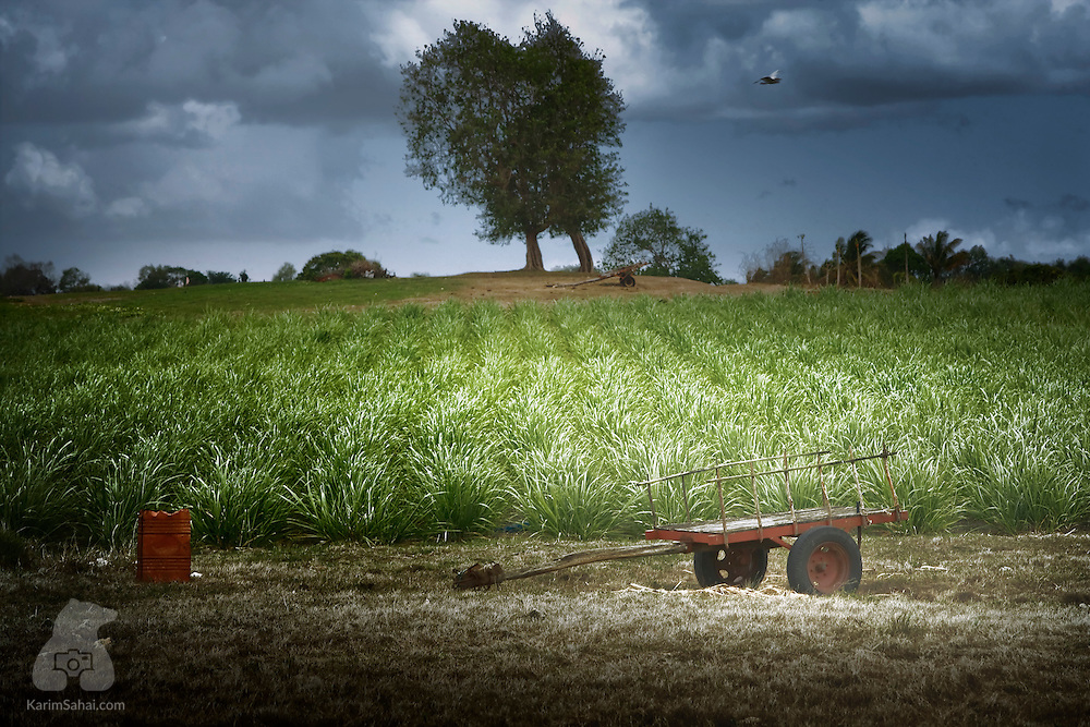 An empty cart lies in a sugar cane field, Le Moule, Guadeloupe.<br /> <br /> Sugar cane and its derivative, Rum, were the economic backbone of the island for many generations. During the slave trade, sugar cane fields were manned by africans untilthe official end of the slave trade.