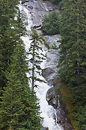 A spruce tree grows precipitously close to a tall cascading unnamed waterfalls in Tracy Arm fjord in the Inside Passage of Southeast Alaska. Summer. Afternoon.
